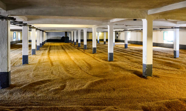 Barley malt on malting floor in distillery, Scotland stock photo