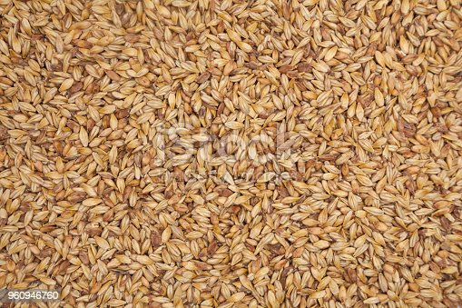 Barley malt background texture