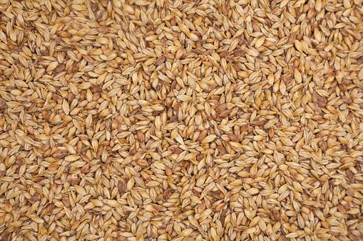 istock Barley malt 960946760