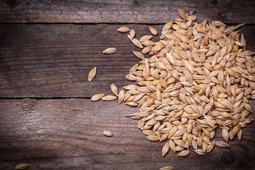 istock Barley 475953396