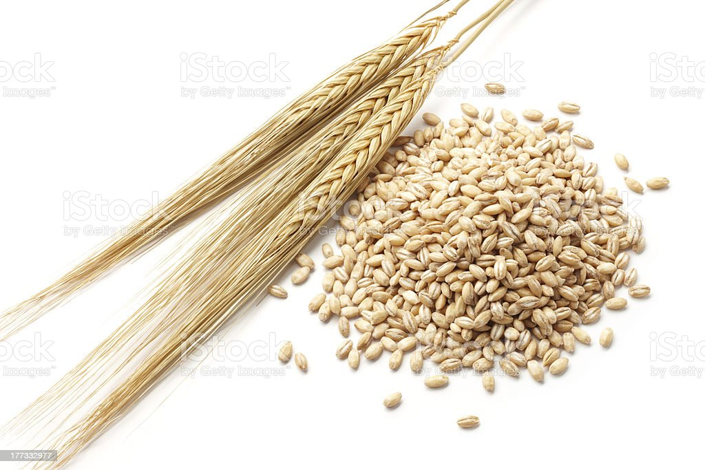 barley with grains stock photo