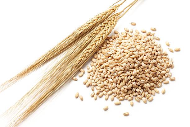보리 곡물 - 보리 뉴스 사진 이미지