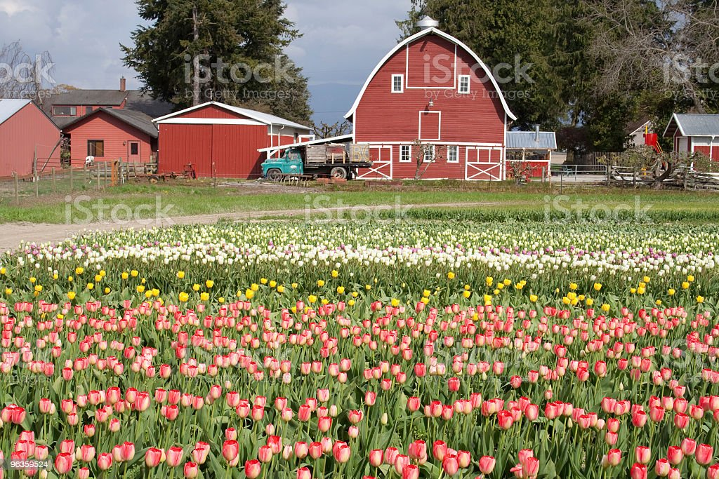 barn and flowers royalty-free stock photo