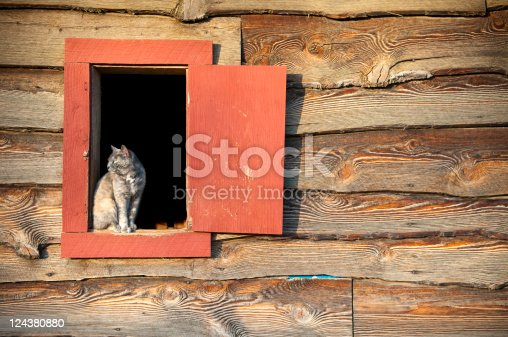 A watchful cat sits in a window at a horse stable. Employed to catch mice.