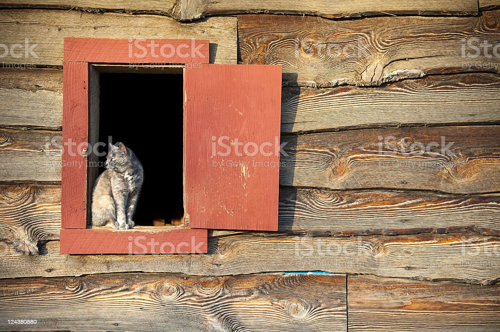 Barn cat in window stock photo