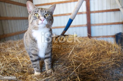 Cat on a pile of hay in a barn.