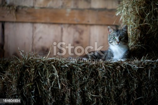 A cat rests on bales of hay in the barn.