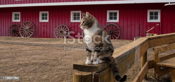 A tabby cat sitting on a fence in front of a barn.