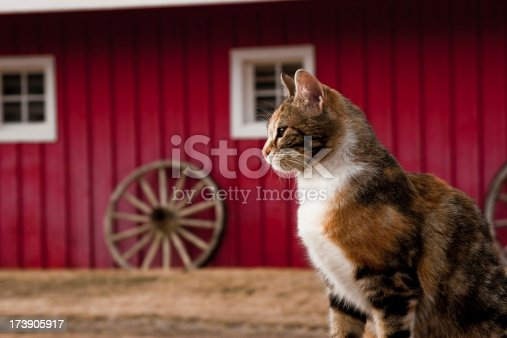A tabby cat sitting in front of a red barn.