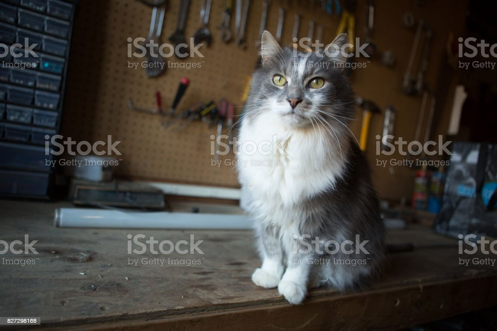 Barn Cat stock photo