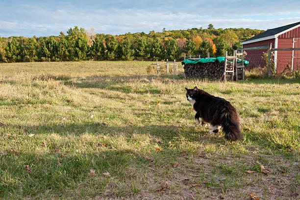 Barn cat walks in a field stock photo