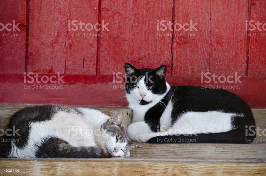 barn cats napping stock photo