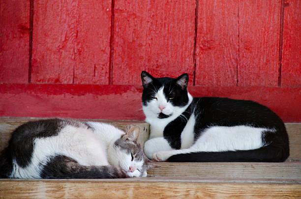 barn cats napping stock photo