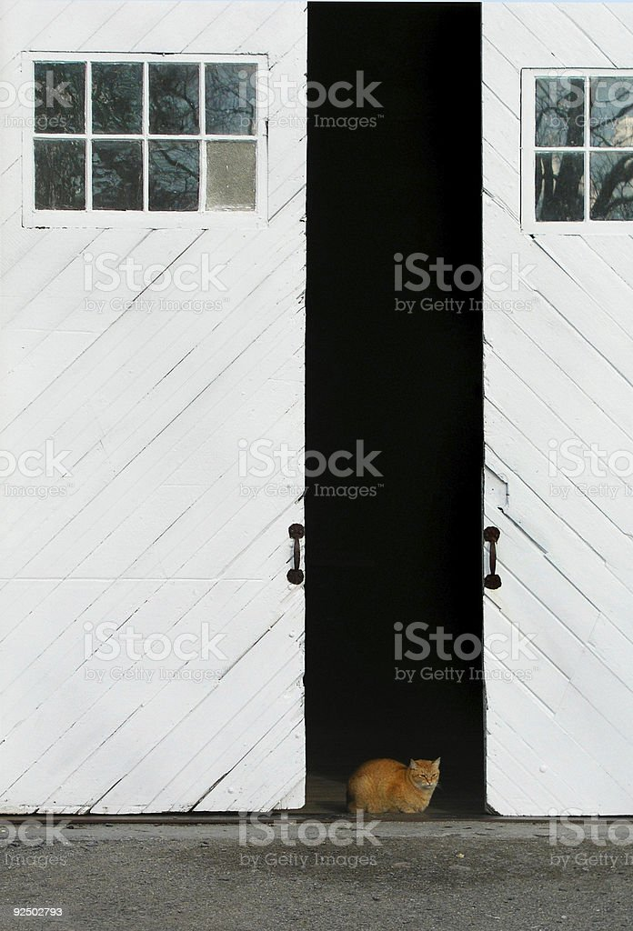 Barn Door Cat royalty-free stock photo