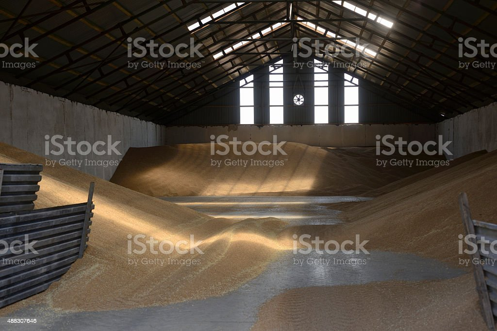 Barn filled with wheat to be dried and stored stock photo