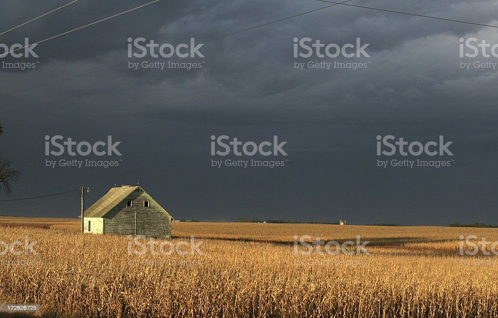 Barn in Corn Field - Storm Clouds royalty-free stock photo
