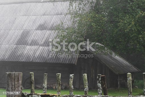 Very old rural barn during early morning fog in autumn. In the background visible birch tree, river and old rural fence with spider webs. Very mysterious and frightening atmosphere