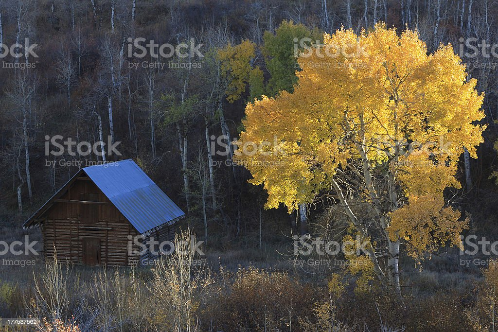 Barn In The Woods stock photo