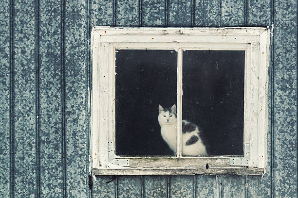 Barn Kitty stock photo
