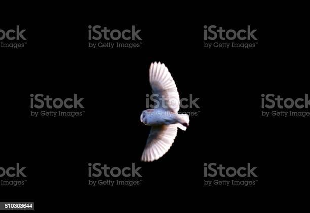 Barn owl bird in flight flying isolated on a black background picture id810303644?b=1&k=6&m=810303644&s=612x612&h=6zzv7mplkgu8ftwabu89jdsdpl9ii2wgnt n7nt4pim=