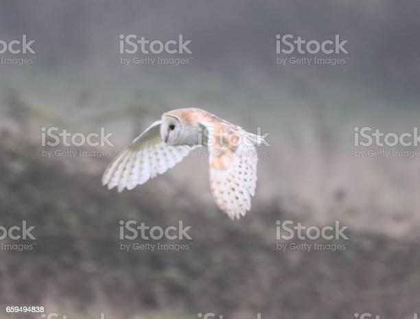 Barn owl bird in flight flying over farm land picture id659494838?b=1&k=6&m=659494838&s=612x612&h=eiypa3ohtbtivpgxag  kwuza9ab8f9h6aryqiljfqg=