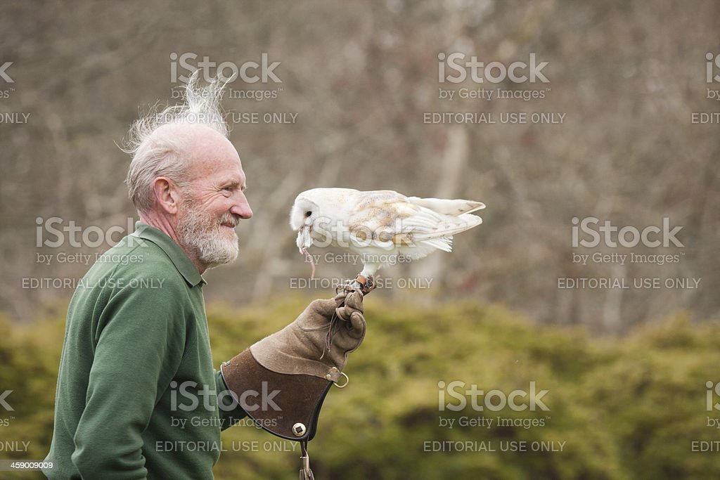 Barn Owl Eating A Mouse royalty-free stock photo