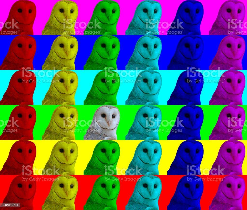 Barn Owl faces colour channels abstract zbiór zdjęć royalty-free