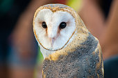 A Barn Owl perched and on a tree stump.