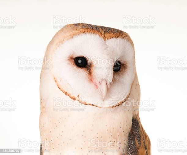 Barn owl picture id184396797?b=1&k=6&m=184396797&s=612x612&h=bvlpb1mxwxhspmulqpvfkohanz00azdxve9d5kjh a4=