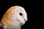 Barn Owl at the North Carolina Raptor Center