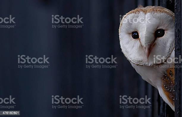 Barn owl picture id476182801?b=1&k=6&m=476182801&s=612x612&h=ndpx8w94rs0b0fupl0jzjcypggnecd6u om89pq8 e4=