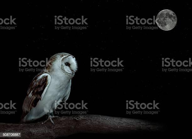 Barn owl picture id508706887?b=1&k=6&m=508706887&s=612x612&h=742f5k gfy8 glv7h2fuhate96rc 8sozjwldjhj11i=