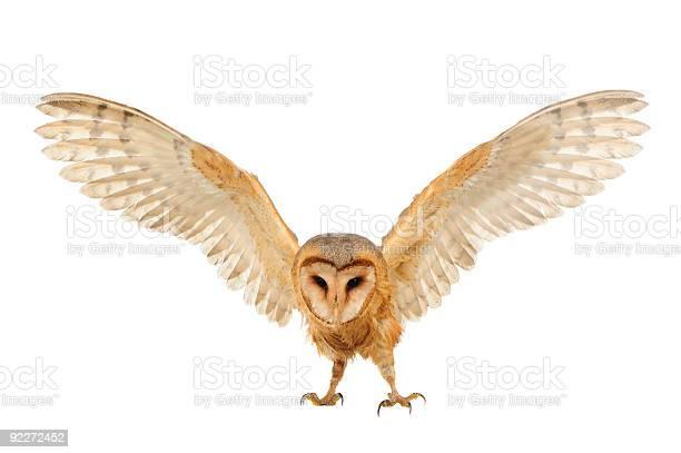 Barn owl picture id92272452?b=1&k=6&m=92272452&s=612x612&h=jvy k5j5nmuoh74fjct0pjzyp nthvttzdcn1gqvhje=