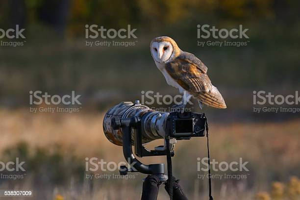 Barn owl sitting on a camera picture id538307009?b=1&k=6&m=538307009&s=612x612&h=xi2pnqt2 5xsxhvftrqz1jxmj1pqsdrdyx0cfvjrwzy=