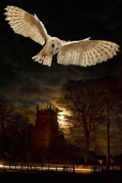Barn owl tyto alba england picture id882284824?b=1&k=6&m=882284824&s=612x612&w=0&h=s46tc8mjuhnt1f usxc1n3gfhl rb7hsftxbu6xhvu8=