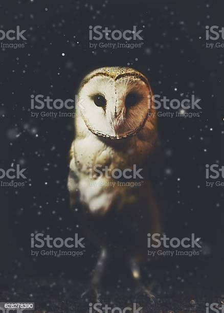 Barn owl winter portrait with snow background picture id628278390?b=1&k=6&m=628278390&s=612x612&h=4nmefifguqilezygwluxckgpkmxecz2zxpvc2ks8zwm=