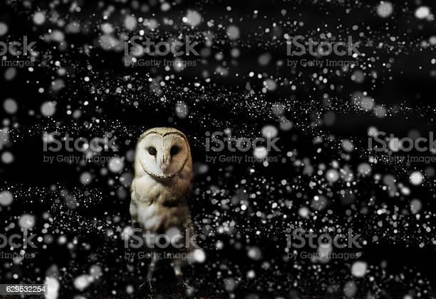 Barn owl winter portrait with snow background picture id629532254?b=1&k=6&m=629532254&s=612x612&h=sx mzmj9fyhuq bzwrqs8vouemw80mbecxwyfoqj g4=