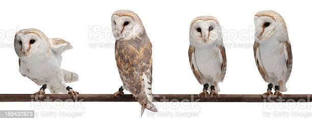 Barn owls picture id155432673?b=1&k=6&m=155432673&s=612x612&h=wdpifkmve1b0mgfvkfrfh9r 0qkut2sv5dms cr9e70=