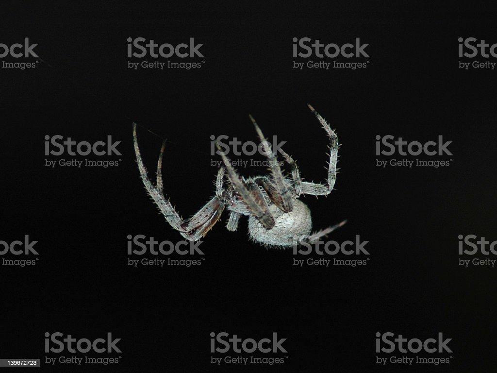 Barn Spider stock photo