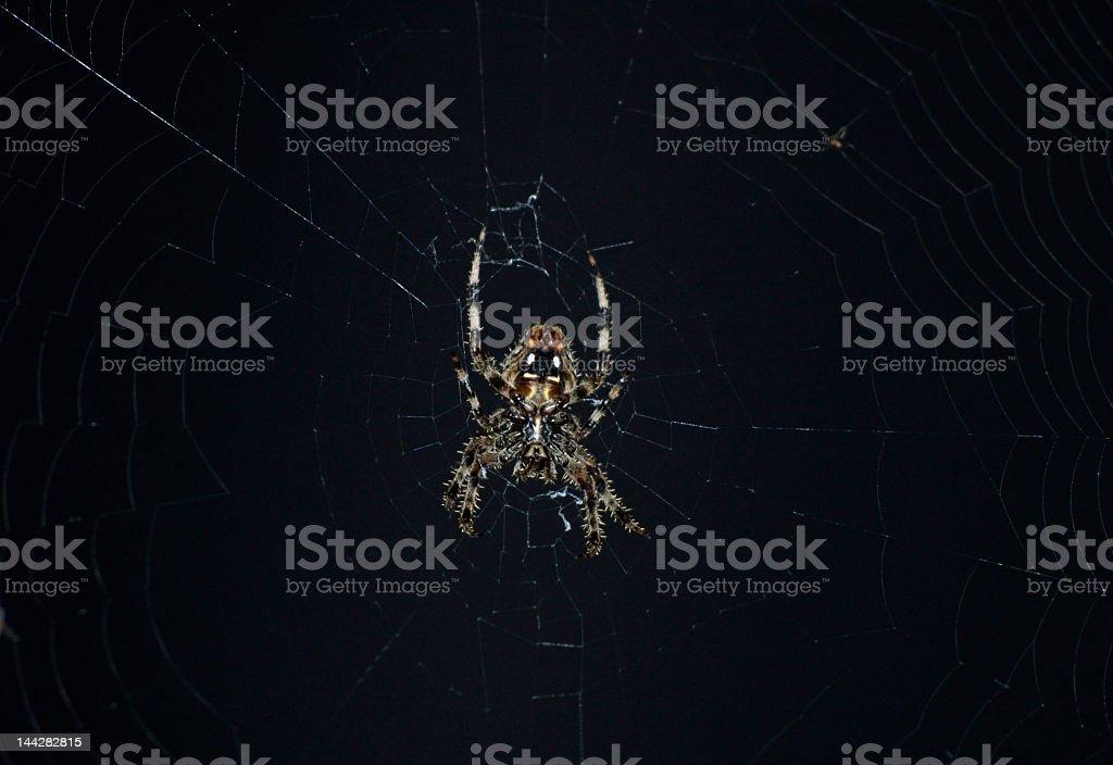 Barn Spider royalty-free stock photo