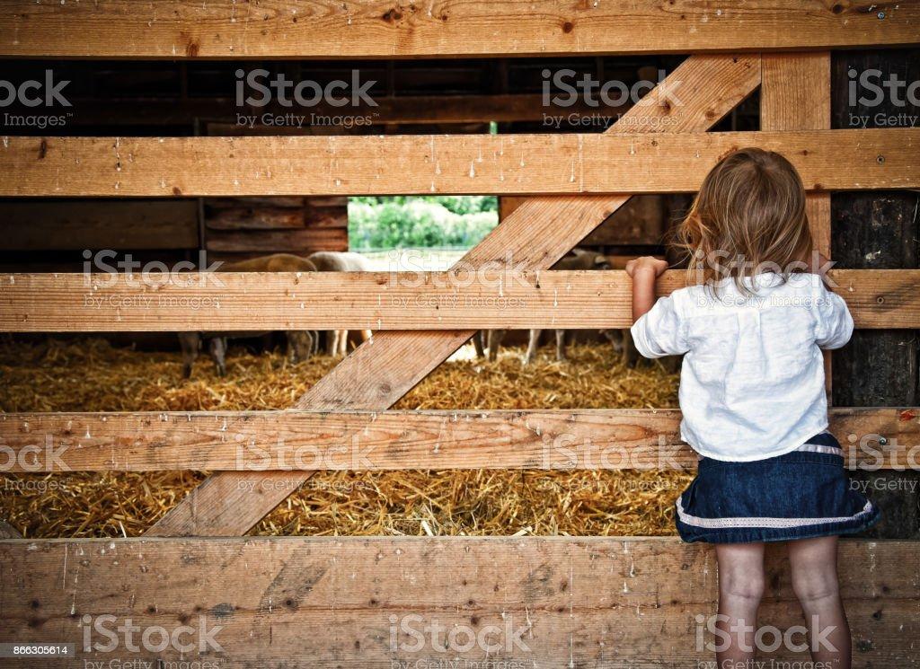 Barn Stormer stock photo
