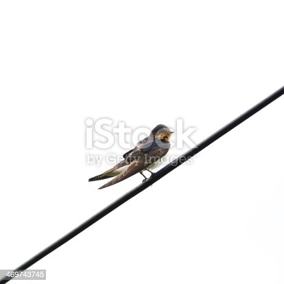 istock Barn swallow, perched on a wire 469743745