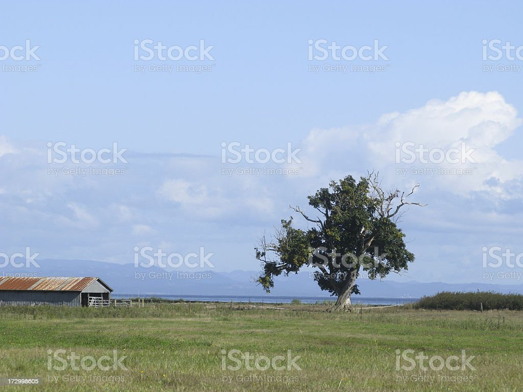 Barn Tree Rural royalty-free stock photo
