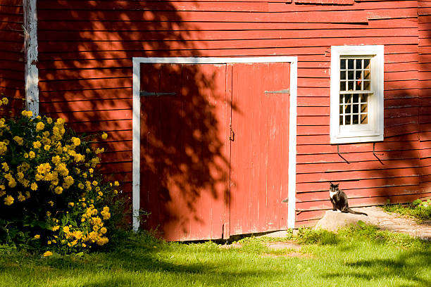 Barn with Cat and Flowers stock photo