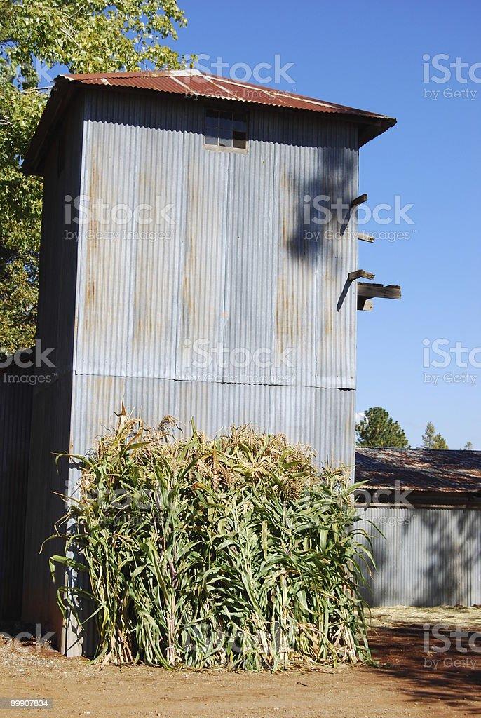 Barn with Corn royalty-free stock photo
