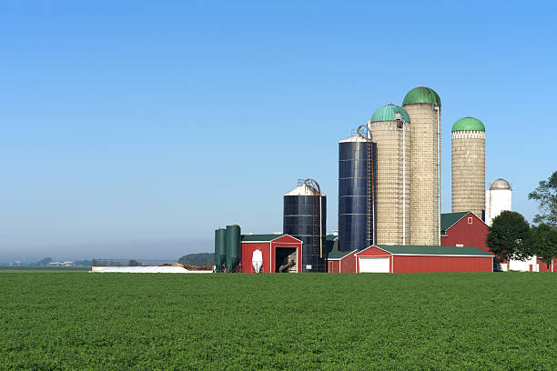 Barn with Multiple Silo's stock photo