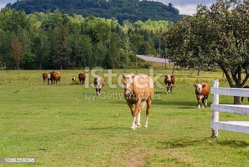 Barnyard Animals - Horse and Cows