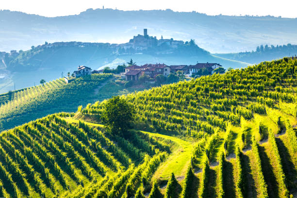 Barolo wine region, Langhe, Piedemont, Italy. Vineyards stock photo