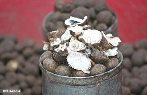 Barometer earthstar mushroom in market,  only have in rainy season