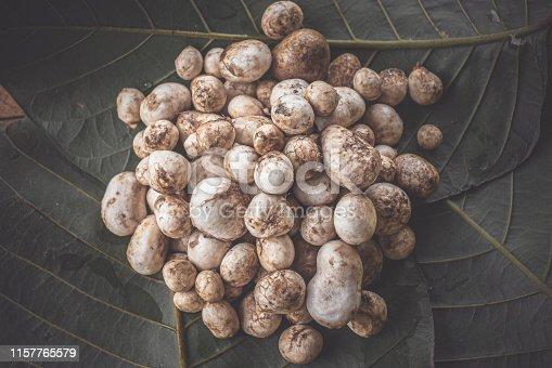 Barometer Earthstars mushroom. ( Astraeus hygrometricus )  local cuisine food in Thailand
